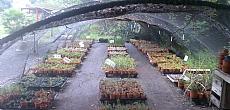 צמחי תבלין